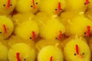 Sklep włókienniczy kurczaczki