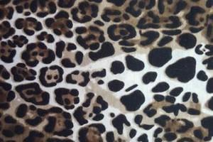 Sklep włókienniczy materiał ze wzorem łapek
